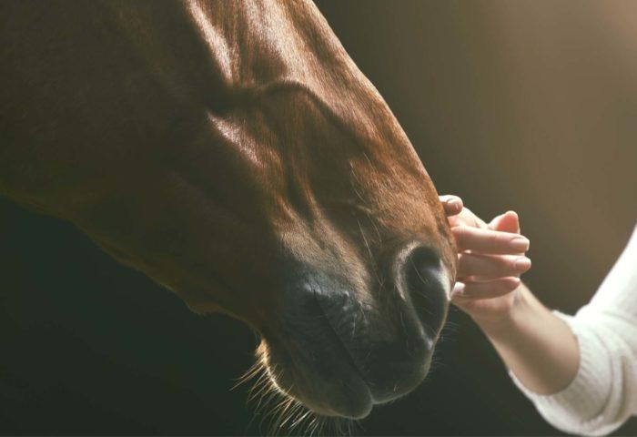 Herzverbindung zu Pferden