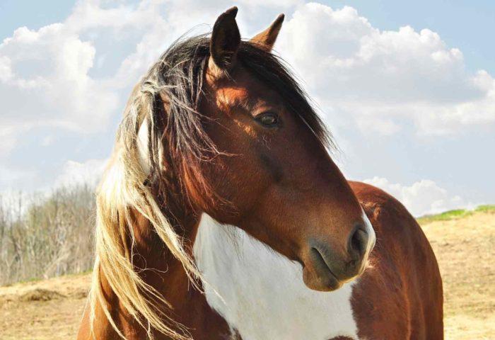 Tierkommunikation mit Pferden