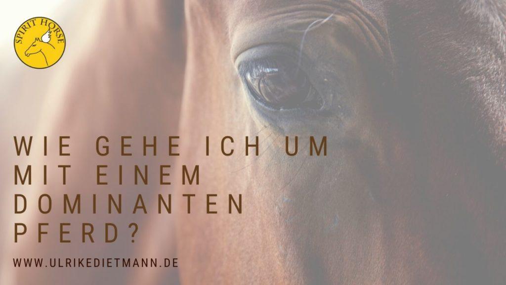 Wie gehe ich um mit einem dominanten Pferd?