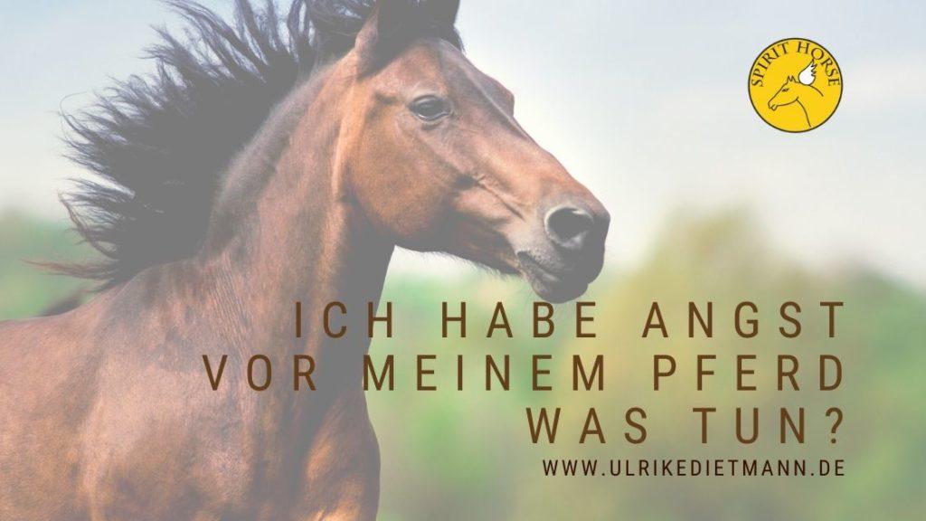 Ich habe Angst vor meinem Pferd Was tun