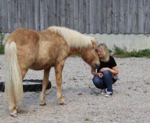 Mein Pferd verstehen