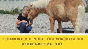 Tierkommunikation mit Pferden - woran die meisten scheitern