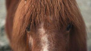 Manchmal haben Pferde einfach Angst - fühle sie!