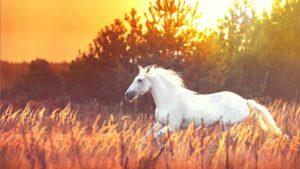 Authentisch und mit dir im Reinen – dein Weg zur Pferdeheldin_fblive