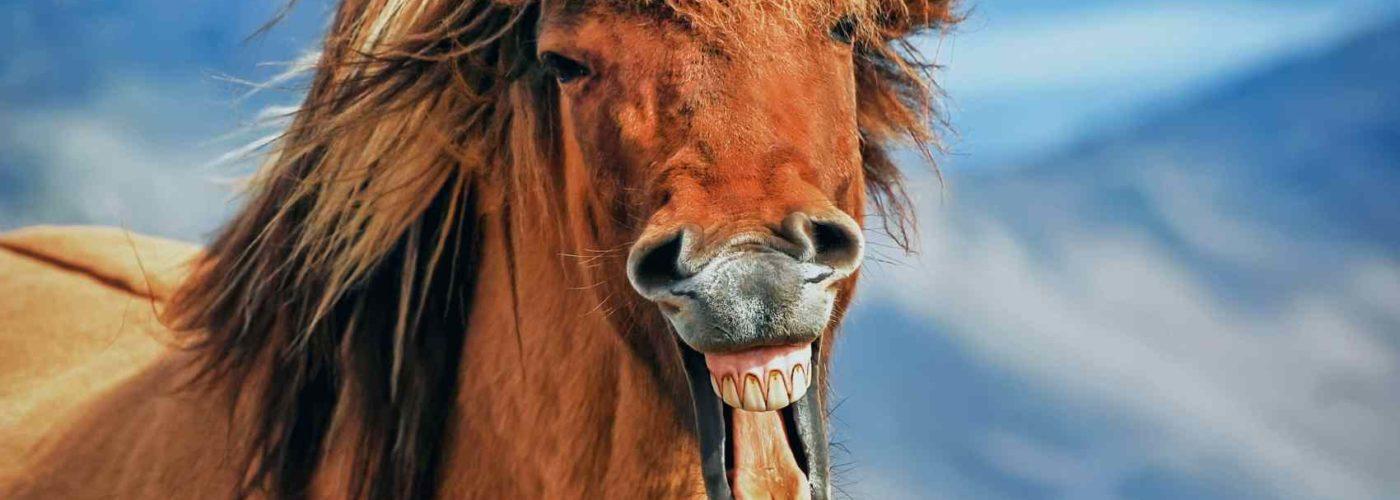 Finde deine Lebensaufgabe mit Hilfe des Pferdespirit