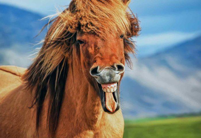 Online Kurs Einzigartigkeit - Herzverbindung zu Pferden