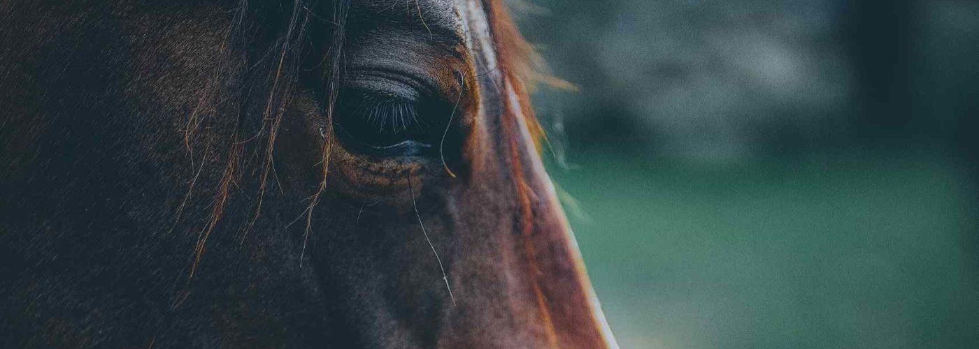 online Kurs ADein Pferd – dein Schamane-Herzverbindung zu Pferden