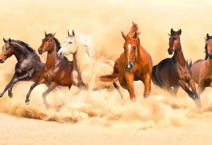 Online Festival_Spirit Horse