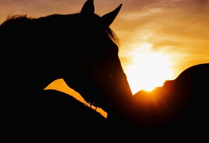 Spirit Horse kostenlose Angebote