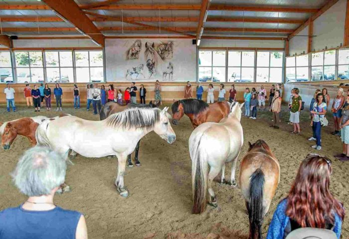 Vor Ort Workshops Spirit Horse