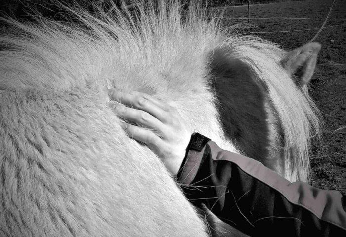 Selbstheilung - Eine Heldenreise Herzverbindung zu Pferden