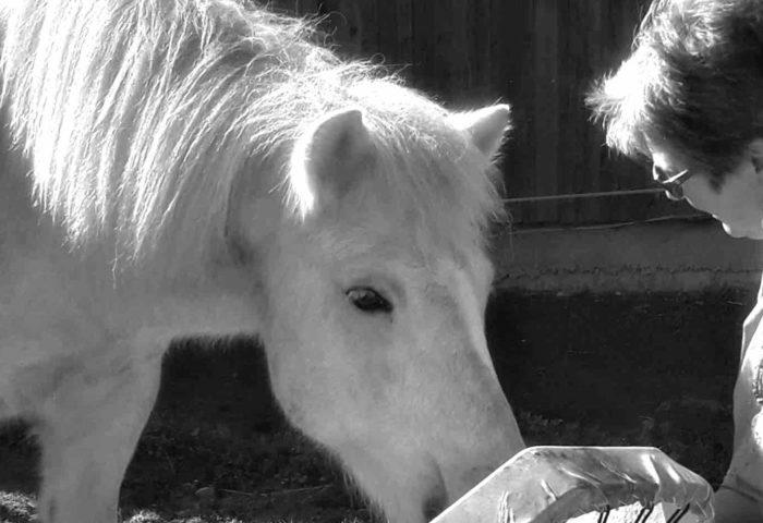 Schamanisch reisen – deine Heldenreise mit Pferden