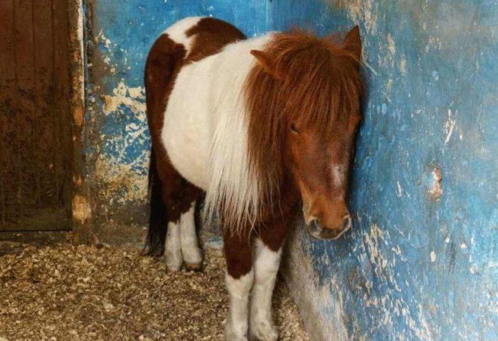 Selbstlernkurs - Herzverbindung zu Pferden - Mit traumatisiertes Pferden arbeiten