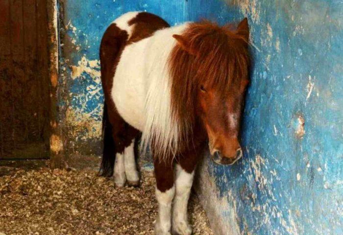 Traumatisierte Pferde- Herzverbindung zu Pferden