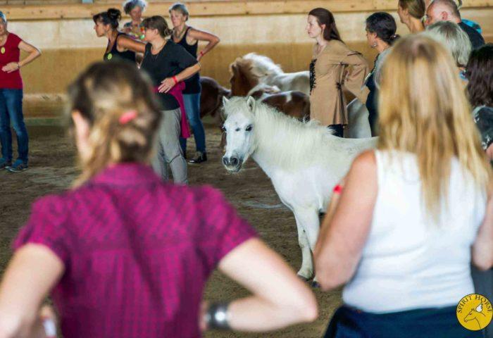 Horse - Spirit Festival Heimsheim.