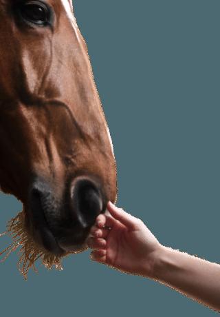 Spirit Horse Club - Verbindung zu Pferden